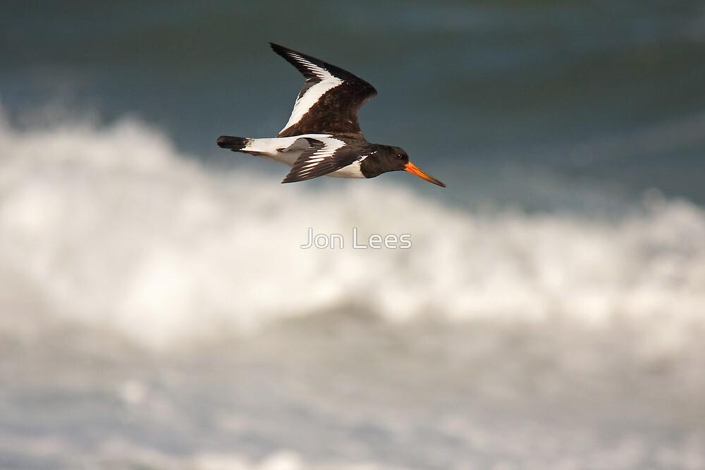 Oystercatcher in flight by Jon Lees