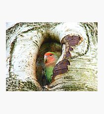 Umm!! Should I Be Collecting Nuts? - Love Bird - NZ Photographic Print
