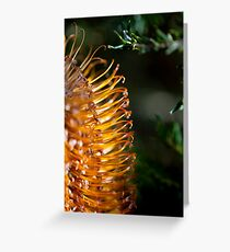 Banksia Bathed in Sunlight Greeting Card