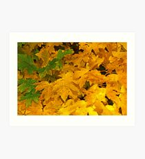 Yellow fall foliage Art Print