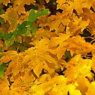 Yellow fall foliage by qiiip