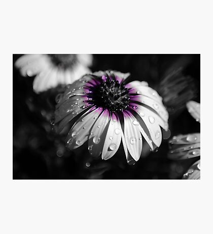 Spring Shower Photographic Print