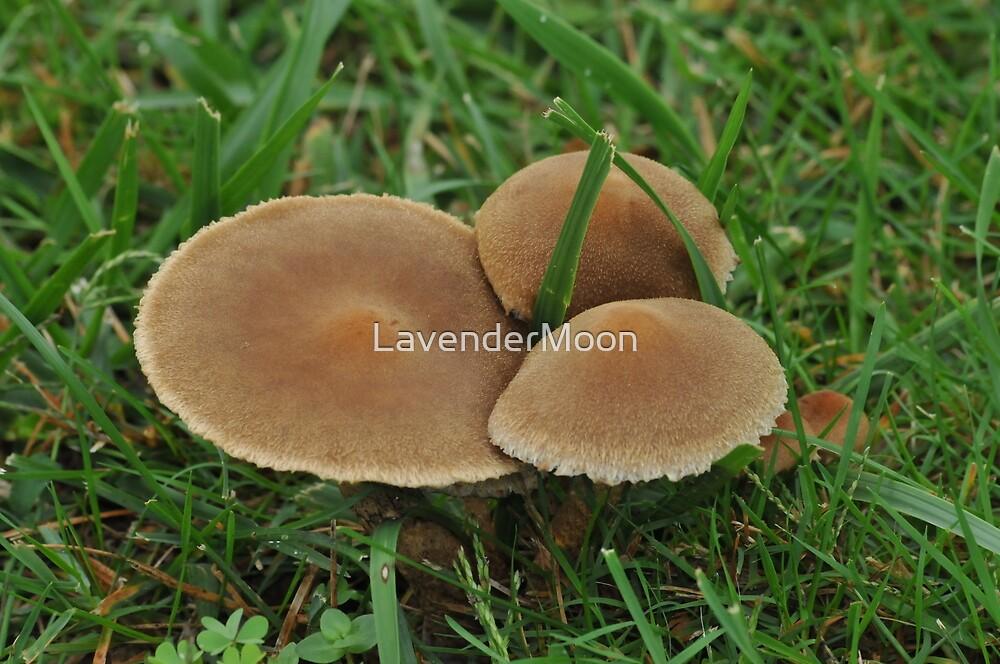 Velvet Pancakes by LavenderMoon