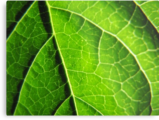 Green leaves produce oxygen by PVagberg