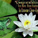 ♥ º ☆.¸¸.•´¯`♥ Sitting on my Lilly Pad Banner ♥ º ☆.¸¸.•´¯`♥ by ✿✿ Bonita ✿✿ ђєℓℓσ