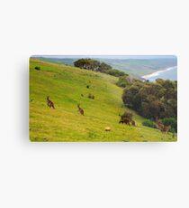 Kangaroos with Joeys grazing Metal Print