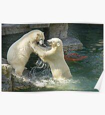 Polar bear playtime Poster