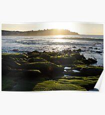 Seagulls on the Rocks - Bondi Beach Poster