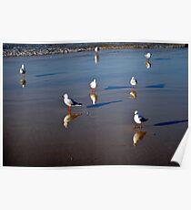 Seagulls on the Sand - Bondi Beach Poster
