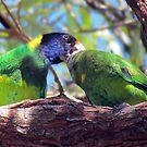 *Twenty-eight Parrot* ~ Feeding The Children by Toni Kane