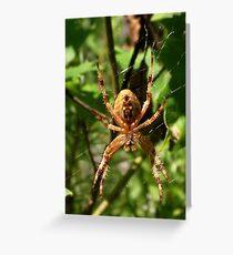 Araneus Spider Greeting Card