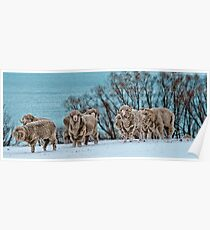 Rams in Snow Poster