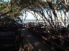 Wynnum North Mangrove Boardwalk by W E NIXON  PHOTOGRAPHY