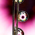 Daisy Drops by Sharon Johnstone