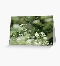 wild carrots, bike route,end of summer Greeting Card
