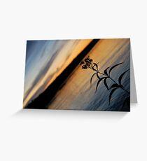 Lonesome Flower - Lunenburg, Nova Scotia Greeting Card