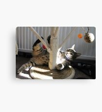 It`s a Cats Life Canvas Print