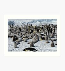 Snow Hill Island Emperor Penguin Rookery Art Print
