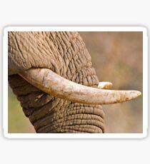 Ivory Sticker