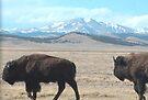 Buffalo Peaks buffalo Park Co Colorado by Christine Ford