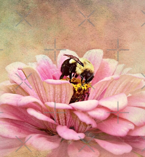 The Quality of Bees by Scott Mitchell