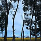 Country Australia - Echuca by Asterii