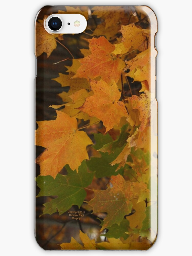 Fall Leaves iPhone case by Thomas Murphy