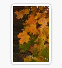 Fall Leaves iPhone case Sticker