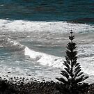 Lennox Head, Australia by allabouther