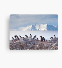 The Creche (Gentoo Penguins, Port Lockroy, Antarctica) Canvas Print