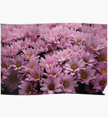 Pink Flowers Poster