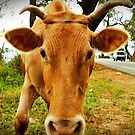 Moove by Kanages Ramesh