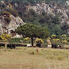 ITALY - TUSCANY MAREMMA PARK UCCELLINA.-PARCO DELL'UCCELLINA MAREMMA TOSCANA -ITALIA-  EUROPA-VETRINA RB EXPLORE 30 GIUGNO 2013 by Guendalyn