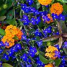 Orange & Blue by Kimberly M. Rupert