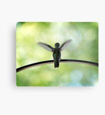 Ruby Throated Hummingbird Metal Print