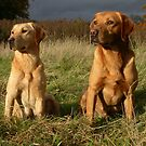 Troy and Amber on a moody autumn day by michaelwallwork