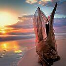 Phoenix by Elisabeth Ansley