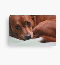 A Little Rascal Canvas Print
