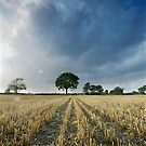Summer Fields by Andrew Leighton