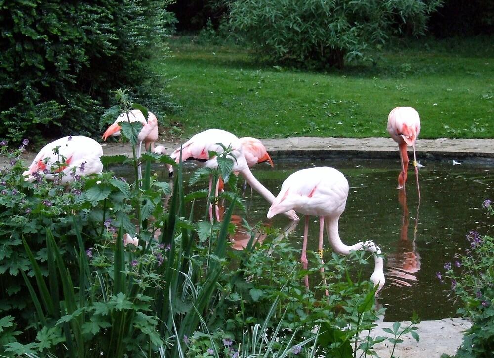 Flamingo Pond by horacecornflake