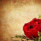 So Romantic  by Marcia Rubin