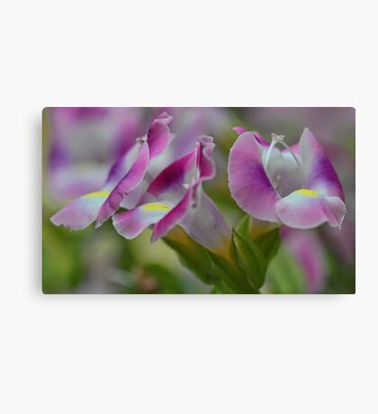 (Wishbone) Magenta Torenia Blossoms Canvas Print