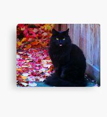 Kitty with an attitude! Canvas Print