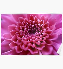 Beautiful pink flower close-up Poster