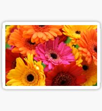 Brightly coloured gerbera Sticker