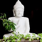White Buddha by phil decocco