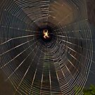 Spider In The Spotlight by Heather Friedman