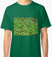 Dew on green plants that grow from the fallen yellow leaves Classic T-Shirt