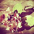 Last of the Summer - Hydrangea by Sybille Sterk