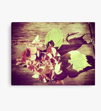 Last of the Summer - Hydrangea Canvas Print